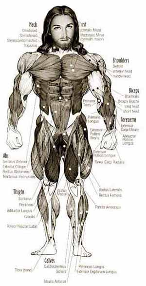 jesus_muscle-300-web