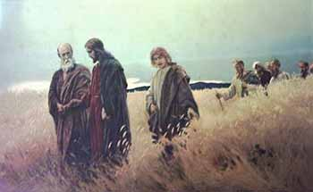 Jesus-the-Grain-Field-350-web