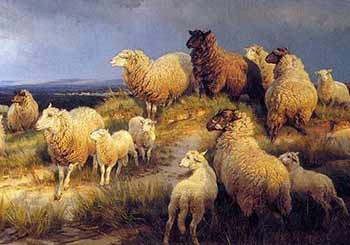 Sheep-on-a-hill-cropped-350-web